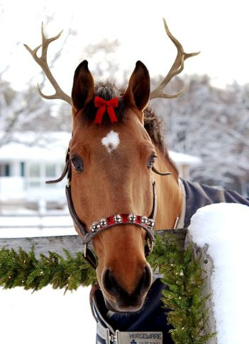 cheval noel.jpg